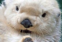 cutesy animals