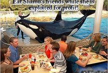 Seaworld Cares / Is Seaworld a marine park that is truly about protecting cetaceans? Many animal rights advocates disagree. A picture says a thousand words. You decide