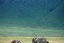 Animals: Elephants