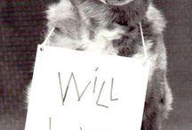 fundraising pet ideas and fun stuff
