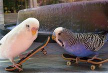 Birds-Lara / BIRDS!!!!!!!