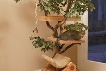 ideas gatitos