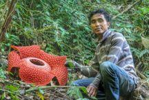 west sumatra / Sumatera barat west sumatra