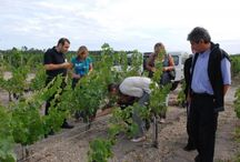 France: Wonderful wine-experiences / This is for those of you enchanted by french wines and the culture behind!
