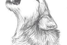 School Project On Wolf