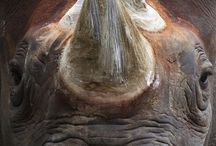 awesome animals / by Agatha Tilford