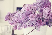I LOVE Lilacs !!!!!! / Flowers
