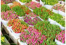 Flower markets/wholesalers