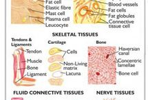 Body Systems: Tissues