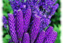 Lavender Stuff