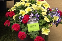 Combo Recipes / Fun and beautiful combo planters.  Perfect for patios, balconies, porches or anywhere you please!