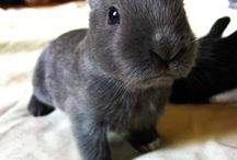 Absolut cuteness / Adorable pets, mostly bunnies