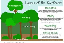 Theme - Rainforest and its Animals