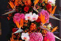Bloem Strelitzia arrangement flowers