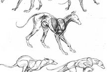 how to draw dogs, bears and hyenas