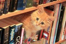 Тёплые коты ))