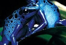 Animals: Frogs / Photo galleries dedicated to frogs.