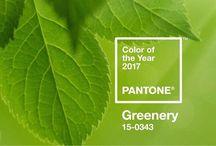 kolor roku 2017