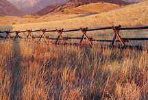 Montana / by Rebecca Belich
