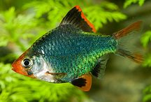 Diverse Fish and Akvarier. 1.