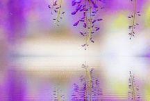 Flori violete  nu