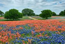 Everything in Texas is..... / Because I was Born & Raised......Thank God I'm a Texas Gal!  / by Mrs. Wonderful♡
