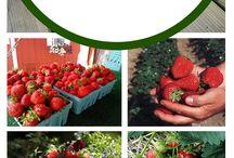 Κηπουρική λαχανικών