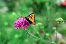 pluktuinen / pluktuinen  en soorten bloemen die handig zijn