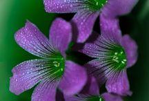 Flora/ Fauna