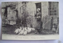 The Morvan-Local history