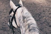 Horses/lovak