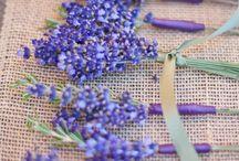 Lavender  / by Cheryl N