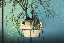 Plantenhoekje
