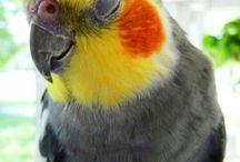 Попугаи/Parrot's / Пожалуйста! Если вы хотите стать соавтором этой доски то не сохраняйте! пины с другими видами птиц! Только с попугаями! И видом попугаев жако