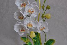 Orchidea 2