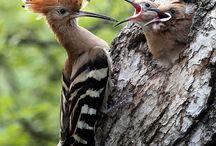 Dieren: Vogels / Mooie foto's van vogels