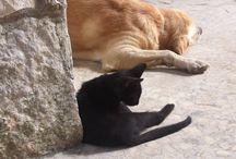 My sweet labrador / Meravigliosi amici