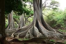 Árvores - tela