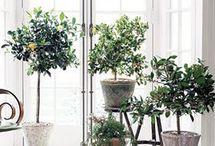 Blomster og Planter / Blomster og Planter
