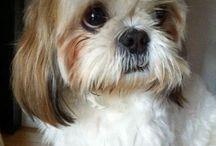 ♡♡♡My dogs! / by Cyndi Frederick