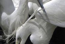 Animals / by Larisa Fridman