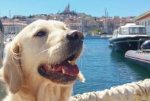 Dog Friendly France