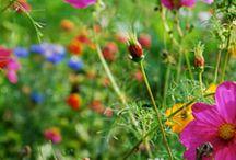 nature,fleurs