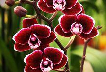 Flores&companhia