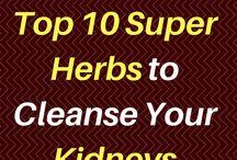 10 herbes qui nettoient le système