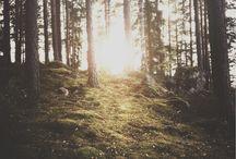 Skogsbär / mat i skogen