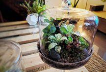 DIY terrariums and micro gardens