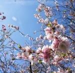 Giappone / Aiutaci ad arricchire questa board con le foto e i video dei tuoi viaggi e qualsiasi altra cosa riguardi il Giappone. Pin here!
