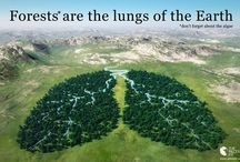 Forest lungs of the earth