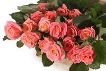 Russian Roses / Russian roses - www.russianroses.ru